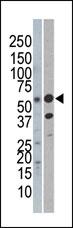 AP13405PU-N - REL