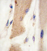 AP11406PU-N - Cadherin-15