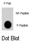 AP12878PU-N - RPS6KA3 / RSK2