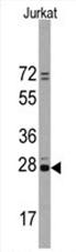AP11485PU-N - CD9