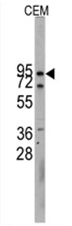 AP11487PU-N - Cadherin-10