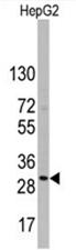 AP11488PU-N - CD9