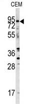 AP11526PU-N - CD282 / TLR2