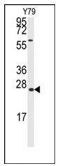AP12434PU-N - GADD45A