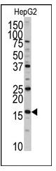 AP12472PU-N - XTP3TPA / DCTPP1