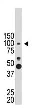 AP11899PU-N - PROX-1