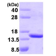 AR09214PU-L - TBCA
