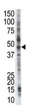 AP11951PU-N - PSMD4 / MCB1