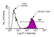 AM08060FC-N - CD152 / CTLA4