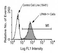 AM08074PU-N - Integrin alpha 4 beta 7