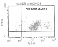 DM3522B - CD309 / VEGFR-2 / Flk-1