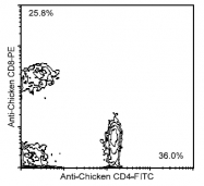 AM08116RP-N - CD8