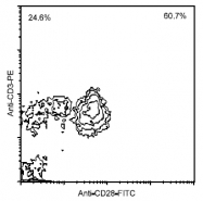 AM08121FC-N - CD28