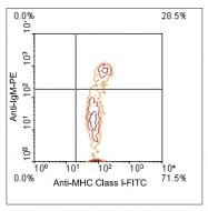 AM08130FC-N - MHC Class I