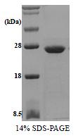 SA6017 - Phosphoserine phosphatase