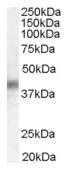 AP15924PU-N - DUSP1 / MKP1