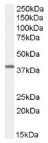 AP15988PU-N - Dysadherin / FXYD5