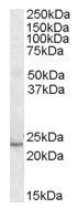 AP16032PU-N - KLF16