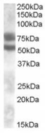 AP16993PU-N - DACH1