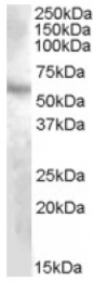 AP16998PU-N - DMP1
