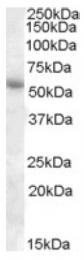 AP17036PU-N - PTGER3