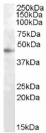 AP17041PU-N - RASSF6