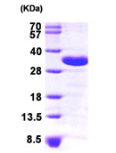 AR09253PU-L - CHMP2A / BC2