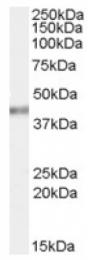 AP16920PU-N - PCBP4