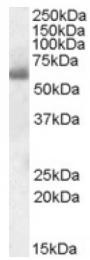 AP16936PU-N - SH2D3A