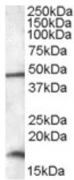 AP16942PU-N - RBM3