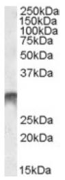 AP16961PU-N - DLX5