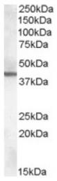 AP16971PU-N - ABHD12