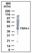 AP08399PU-N - PAPD7 / POLS / TRF4