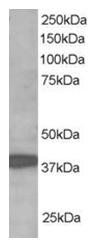 AP16103PU-N - HZFW / RNF39