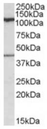 AP16849PU-N - COG1