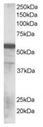 AP16107PU-N - RNF8