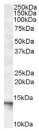 AP16869PU-N - C1D
