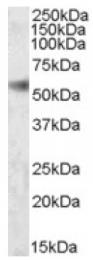 AP16882PU-N - SH2D4A