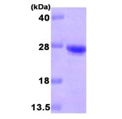 AR09276PU-L - CDO1
