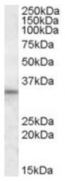 AP16902PU-N - HAX1