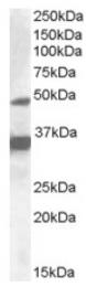 AP16905PU-N - NR1I2