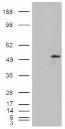 AP16913PU-N - STEAP4