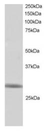 AP16132PU-N - RNF141