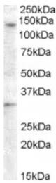 AP16772PU-N - GPR125