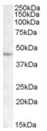 AP16774PU-N - LHX2