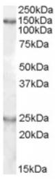 AP16777PU-N - KIAA0319
