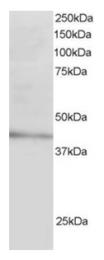 AP16143PU-N - LDLRAP1