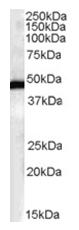 AP16150PU-N - FBXL2 / FBL2 / FBL3