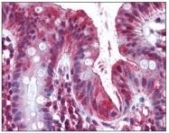 AP08459PU-N - Olfactomedin-4