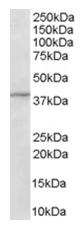 AP16169PU-N - ADAP1 / CENTA1